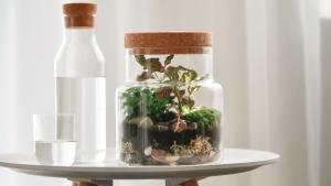 mini ecosysteem, storyplanter, glas plantenpot met kurken deksel