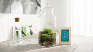 storyplanter on kitchen table with ixxi background
