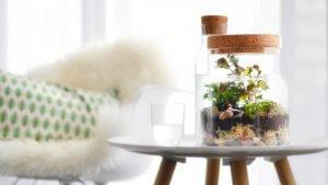 ecosysteem strouplanter op salontafel interieurstyling