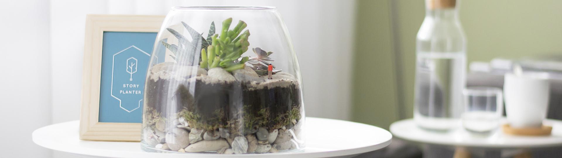 mini, ecosysteem, storyplanter, mini wereld, glazen pot, plantjes,