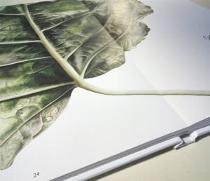 leavescape book with huge leaf from inky leaves leavescape plantenboeken