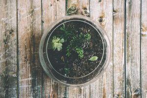 open terrarium succulenten storyplanter blog