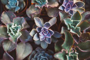 succulenten bij elkaar storyplanter blog