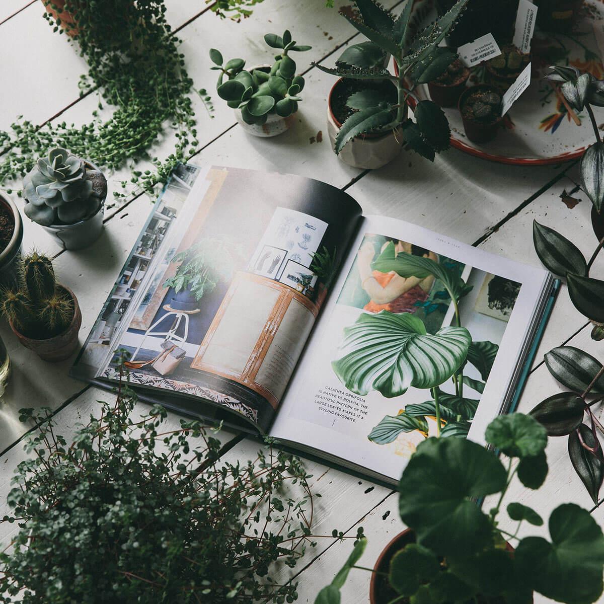 hangplanten erwtenplant en kamerplant blauwvaren hangend naast elkaar