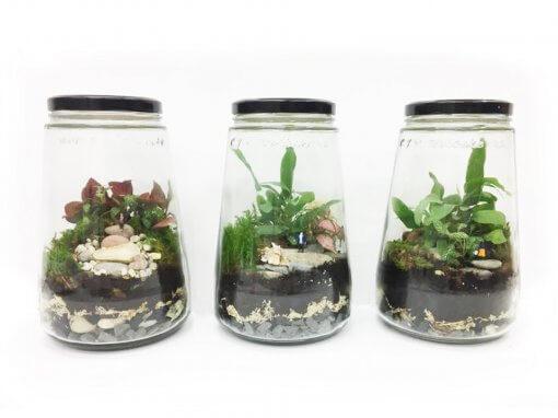 kesbeke terrarium maken workshop