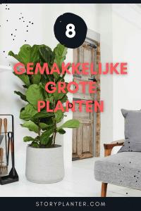 8 GROTE gemakkelijke planten