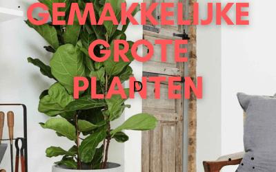 Top 8 Grote Gemakkelijke Planten : de mooiste groene blikvangers voor binnen