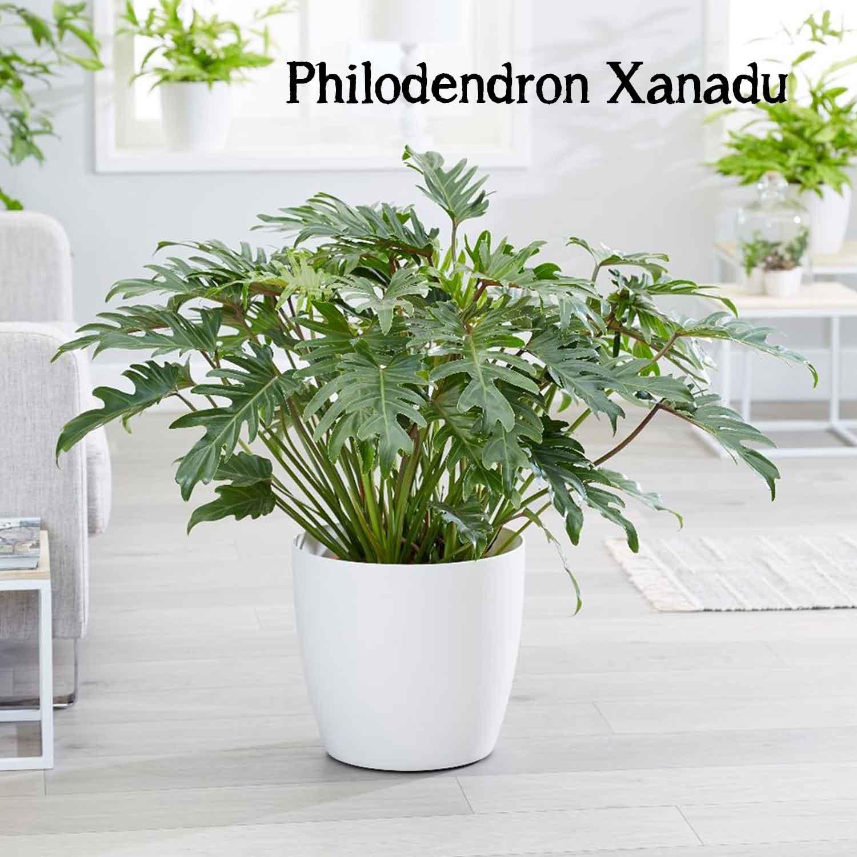 makkelijke grote kamerplant