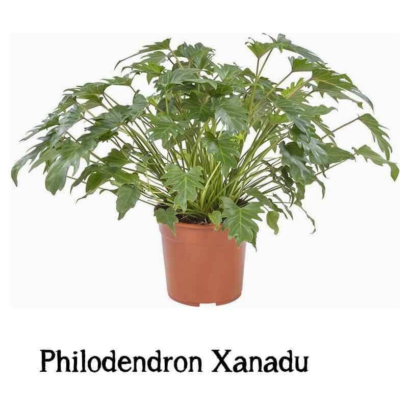 makkelijk te verzorgen grote plant kopen
